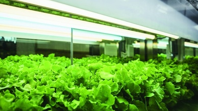 Auch im Horticulture-Bereich spielen LEDs ihre Vorteile aus
