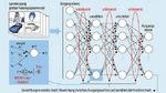 In der Trainingsphase werden die Paramter eines neuronalen Netzes bestimmt. Dieser Vorgang erfordert viel Rechenleistung