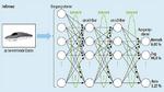 Ist das neuronale Netz trainiert, dann sind die Parameter konstant. Für die Inferenz, die Anwendungsphase des neuronalen Netzes ist wesentlich weniger Rechenleistung erforderlich