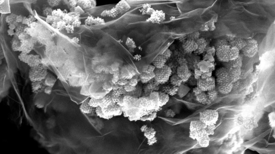 HRSEM-Bild eines 3D/2D-CuO-NIO Graphen-Nanokomposits als aktives Anodenmaterial.
