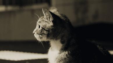 Katze auf einer Einfahrt.
