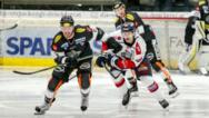 Die Heimspiele der Dornbirner Bulldogs finden nun im besten Licht statt – wie hier bei der Erste Bank Eishockey Liga gegen HC Orli Znojmo