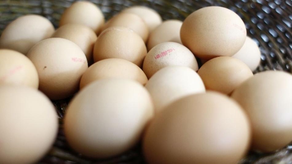 Eierschalen bestehen aus porösem Calciumcarbonat, das sich sehr gut für elektrochemische Speicher eignet.