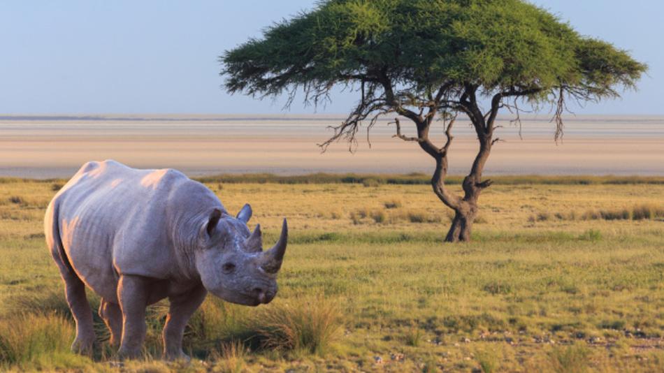 Rhinozeroshorn ist bei Wilderen sehr beliebt, da damit hohe Preise am Schwarzmarkt erzielt werden. Flug-Roboter sollen nun beim Kampf gegen Wilderei helfen.