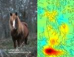 Die Heatmap neben dem Foto ist das Ergebnis der LRP-Technik und zeigt an, welche Bildpunkte wesentlich zu der Entscheidung des Algorithmus beigetragen haben. Rote Pixel stehen dabei für wichtige Bildpunkte.