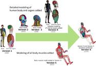 Model menschlichen Körpers und Organe