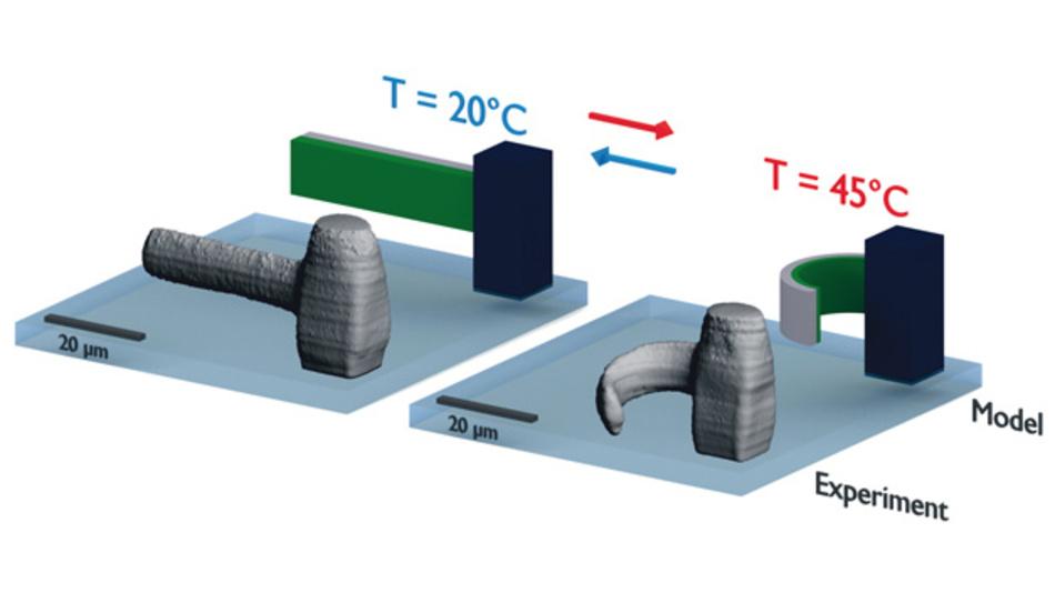 Das richtige Material macht's: Die Objekte aus dem 3D-Drucker  sind auch nach dem Druck noch beweglich und  können etwa durch Temperaturänderung stimuliert werden.