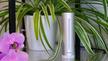Eine Wetterstation vor einer Zimmerpflanze mit zwei Orchideenblüten