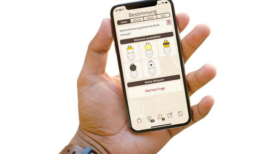 Mithilfe von Fragen und Bildern können nun auch Laien Hummeln mit ihrem Smartphone bestimmen.