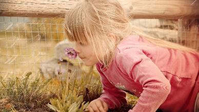 Kind riecht an einer Blume (Symbolbild).