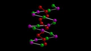 Eine Kette aus Zinn- und Iod-Atomen bildet die eine, die Phosphoratome die andere Kette der Doppelhelix von SnIP.