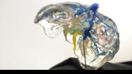 3D-Modell einer Leber