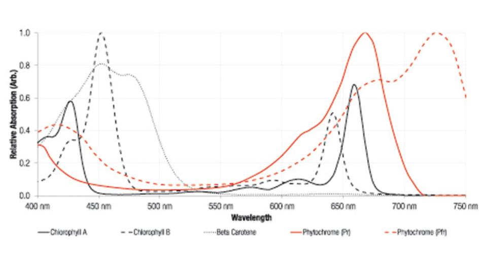 Typische Absorptionsspektren der Hauptpigmente von Pflanzen