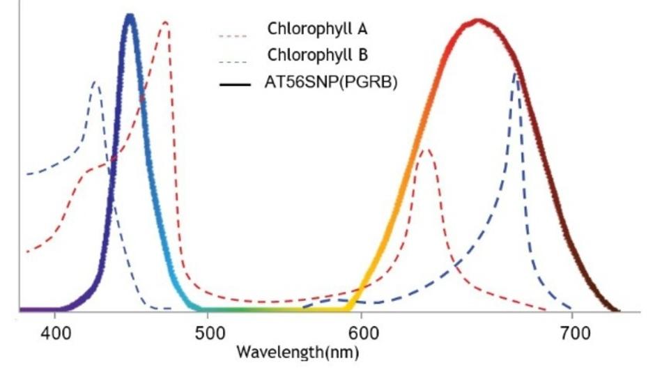 Absorptionsspektrum von Chlorophyll A und B sowie Emissionsspektrum der PGRB-LED für Pflanzenwachstum.