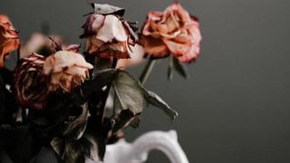 Vertrocknete Rosen, die das Ende des Lebens darstellen.