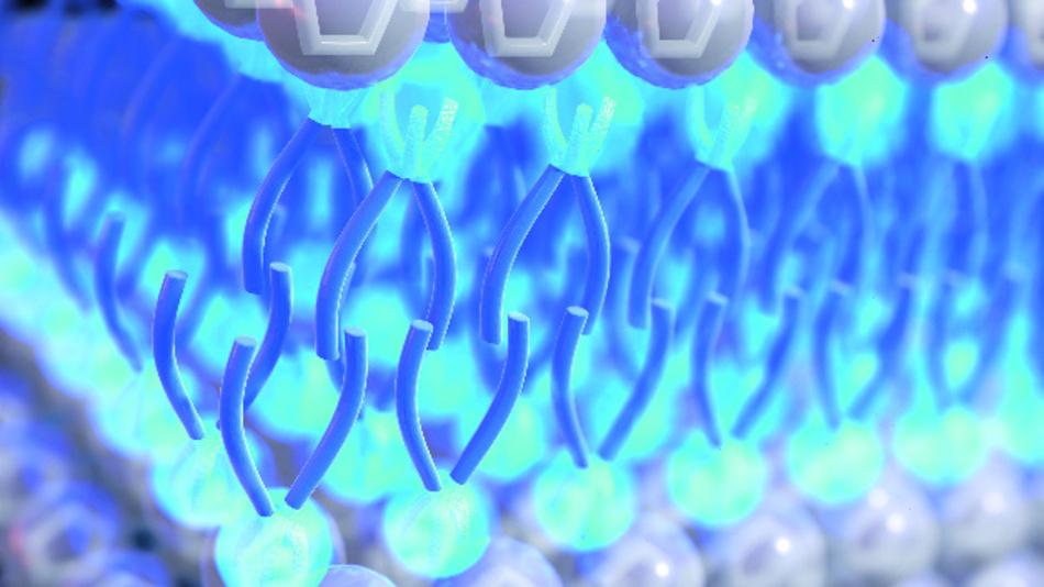 Große Anionen mit langen Schweifen (blau) in ionischen Flüssigkeiten können sie sich selbst zu sandwichartigen Doppelschichtstrukturen auf Elektrodenoberflächen zusammenfügen. Ionische Flüssigkeiten mit solchen Strukturen haben eine deutlich verbesserte Energiespeicherungsfähigkeit.