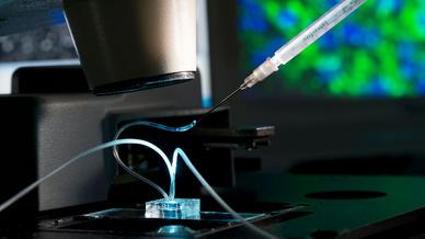 Ein Fettchip unter dem Mikroskop: Über die Spritze wird ein Wirkstoff eingebracht, um das Verhalten und die Reaktion zu untersuchen.