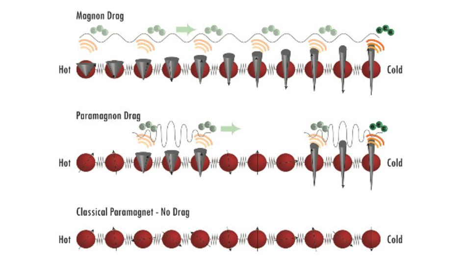 Magnonen – Wellen, die durch Spins einzelner Atome (graue Kegel) erzeugt werden – bewegen Elektronen (grüne Punkte) entlang eines Temperaturgradienten und erzeugen so Thermospannung (oben). Im paramagnetischen Zustand bilden lokale Temperaturschwankungen kleine Anhäufungen von Magnonen, die ebenfalls Elektronen bewegen können (Mitte). Klassische Paramagnete erzeugen keine solchen Bewegungen (unten).