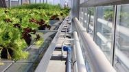 Auf dem Ebbe-Flut-Tisch werden Pflanzen zeitgesteuert mit Wasser und Nährstoffen versorgt.