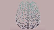 Menschliches Gehirn Künstliche Intelligenz