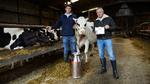 Kameras und Handys für die Kuh