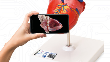 Virtual meets Reality: Durch einfaches Scannen des NFC-Chips im »Smart-Label« an den Modellen von 3B Scientific bekommen Benutzer Zugriff auf die 3B-Smart-Anatomy-Kurse.