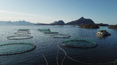 Fischzuchtunternehmen Kvarøy