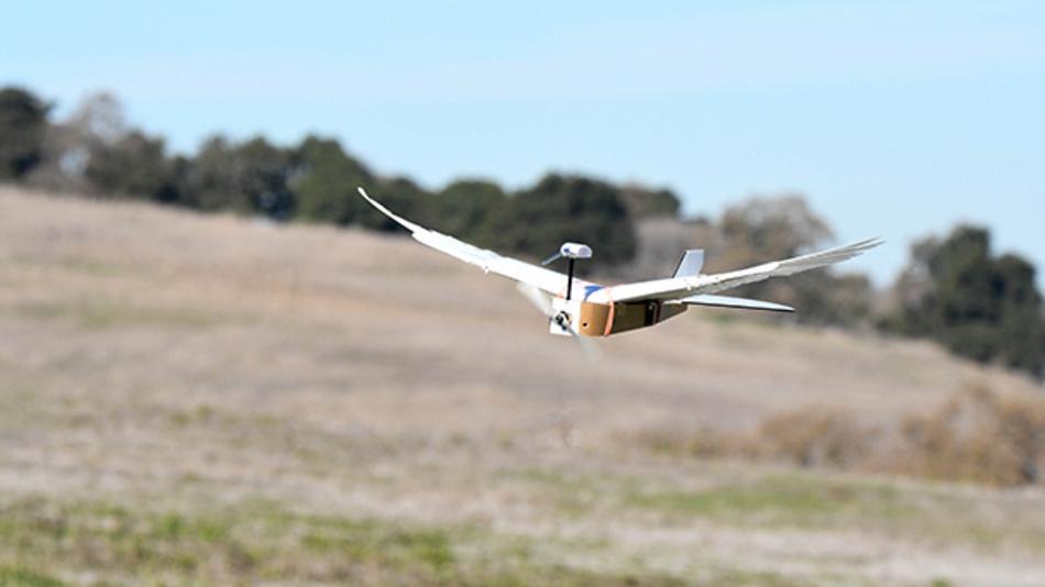 Einen Flugroboter mit echten Taubenfedern haben amerikanische Forscher entwickelt.