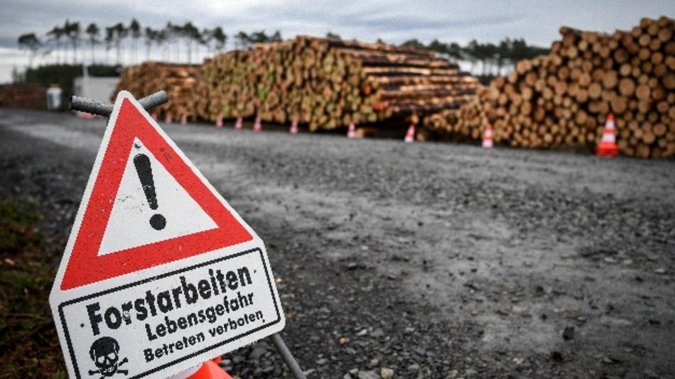 Das Oberverwaltungsgericht Berlin-Brandenburg hat die laufenden Rodungsarbeiten auf dem Gelände für die geplanteTesla-Fabrik in Grünheide vorläufig gestoppt.