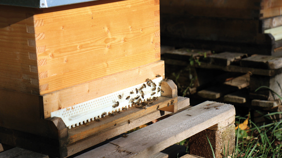 Bienenstock im örtlichen  Poinger Imkerverein