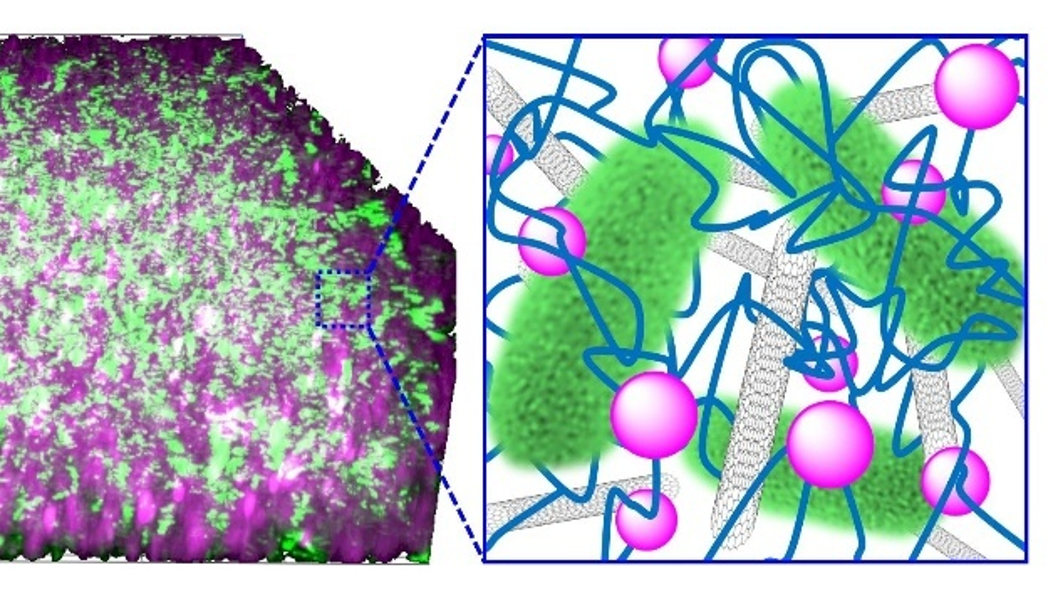 Die Bakterien (grün) sind in einem Kompositmaterial aus Kohlenstoff-Nanoröhrchen (grau) und Kieselsäure-Nanopartikeln (lila) verwoben mit DNA (blau) eingebettet.