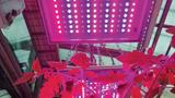 Insgesamt wurden in einer Leuchte für das Wchstum einer Tomatenpflanze 60 Hyper-Red- und jeweils 48 Stück Far-Red- und Deep-Blue-LEDs verwendet.
