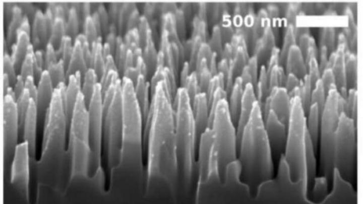 Elektronenmikroskopisches Bild der säulenartigen Nanostrukuren auf der Silizium-Oberfläche der Photodiode