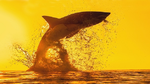 Wenn die Haihaut fliegen lernt
