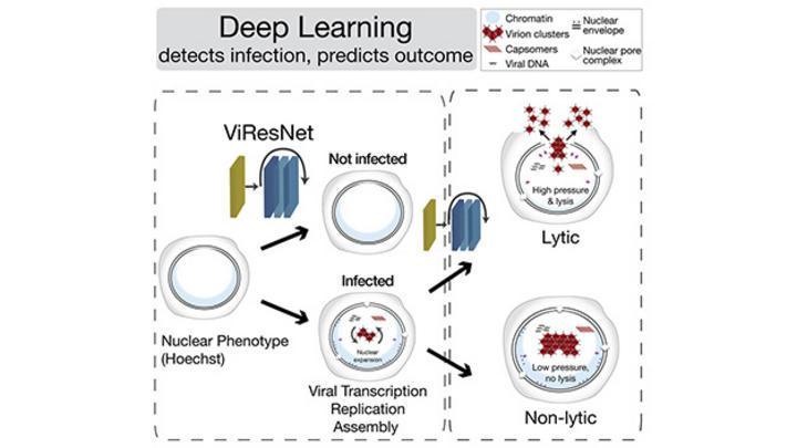Deep Learning Virusinfektionen