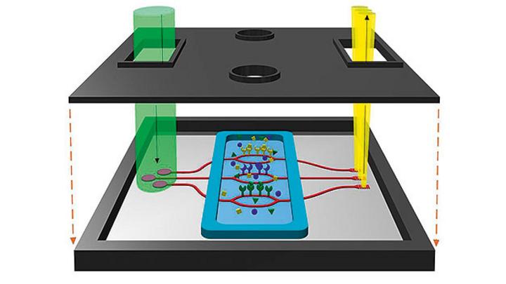 Integrierter Biosensor mit SiNOH-Laserquelle (links) auf dem Chip.