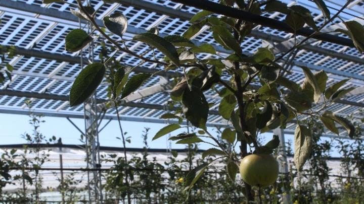 Solarmodule für den Obstanbau